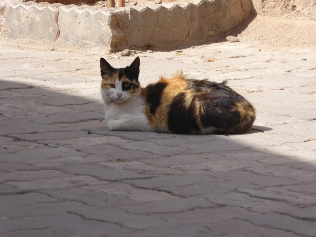 Travel AddictUK Cat1