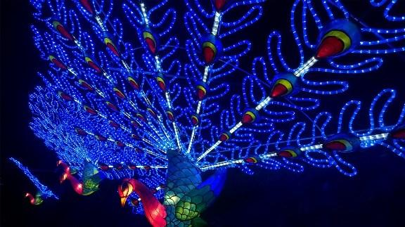 peacock_lantern_l
